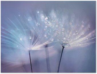 Plakát HD Krásná kapkami rosy na pampeliška semen makro. Krásné modré pozadí. Velký zlatý kapkami rosy na padáku pampeliška. Měkká snový platidlo umělecký obraz formuláře.