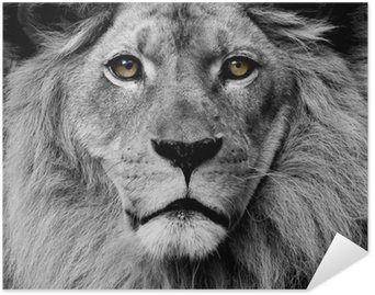 Plakát HD Lion oči