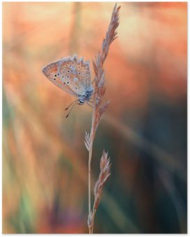 Plakát HD Motýl