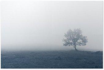 Plakát HD Osamělý strom s mlhou