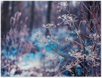 Plakat HD Rośliny pokryte szronem