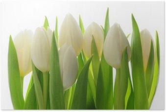 Plakat HD Tulipany