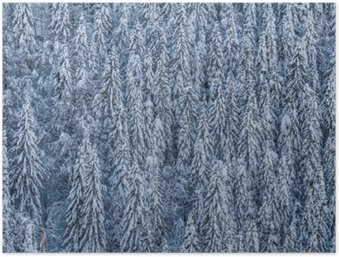 Plakat HD Winterwald