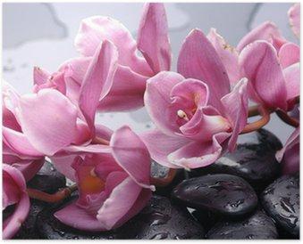 Plakat HD Zestaw kwiat orchidei i kamień Cattleya z kropli wody