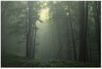 Plakat HD Zielony las po deszczu