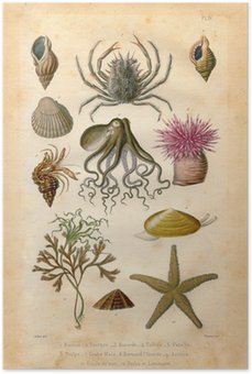 Plakát Histoire naturel: Fond Marin