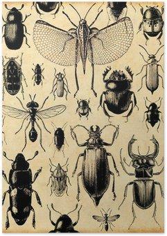 Plakát Hmyz retro pozadí