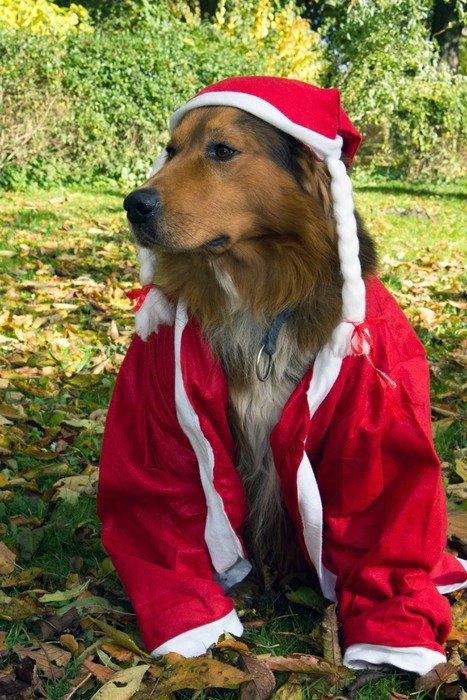 Plakát Hund im Nikolauskostüm - Mezinárodní svátky