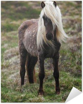 Plakát Island-kůň