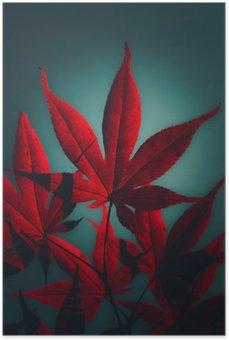 Plakát Japonský javor v karmínové