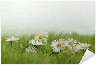 Plakát Jarní louka s sedmikrásky
