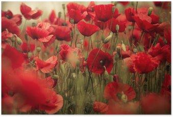 Plakát Jarní Poppy Flowers