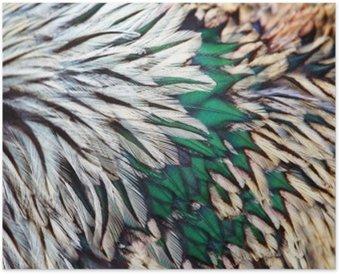 Plakát Jasný hnědý peří skupina nějakého ptáka