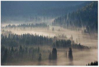 Plakát Jedle na louce dolů vůle k jehličnatého lesa v mlze horách