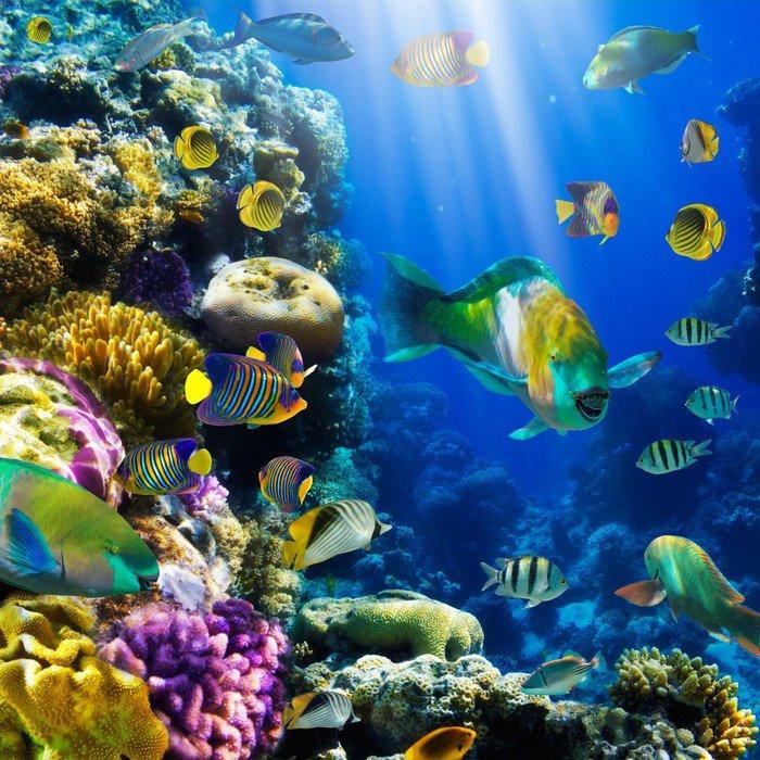 Plakat Koral kolonii koralowców i ryb - Tematy