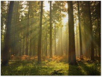 Plakát Krásné lesní