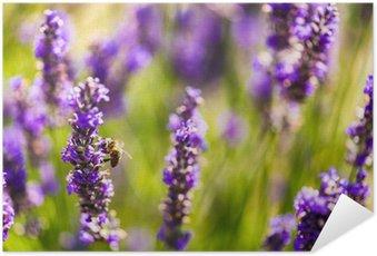 Plakát Krásné levandulová pole Provence, Francie v červenci