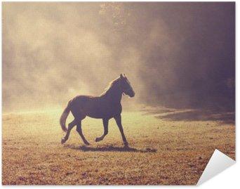 Plakát Krásné ranní slunce mlhavo louka s domácím hnědého koně.