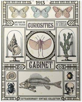 Plakát Kuriozity skříňka