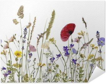 Plakát Květiny a byliny