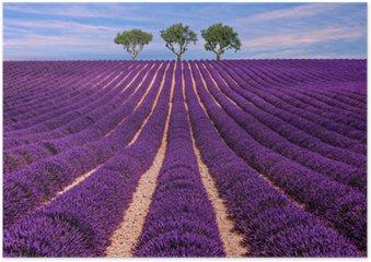 Plakát Lavender pole Letní západ slunce krajina se stromem