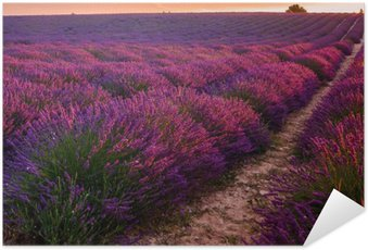 Plakát Lavender pole na východ slunce, valensole plateau (Francie)