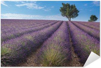 Plakát Lavender pole v Valensole plošiny Provence (Francie)