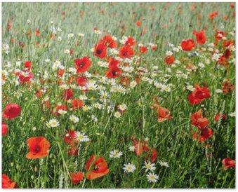 Plakát Letní květiny na louce