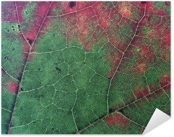 Plakát Listí v podzimu Color