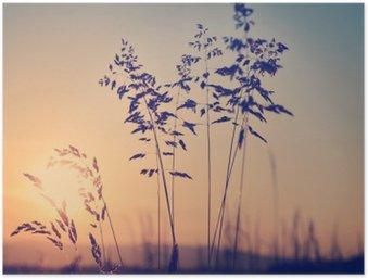 Plakát Louka při západu slunce, zen meditativní scéna