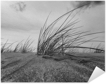 Plakát Marram Grass Close-up v černé a bílé