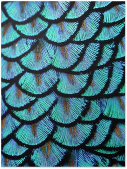 Plakát Modrá peří