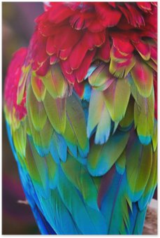Plakát Modré, červené a zelené papoušek peří