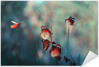Plakát Motýl