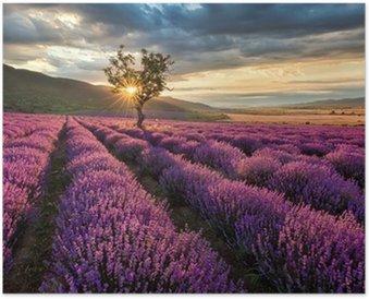 Plakát Ohromující krajina s levandulí pole při východu slunce