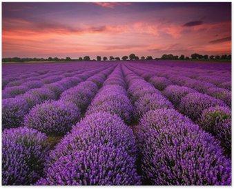 Plakát Ohromující krajina s levandulí pole při západu slunce