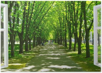 Plakát Otevřelo okno do krásného parku s mnoha zelenými stromy