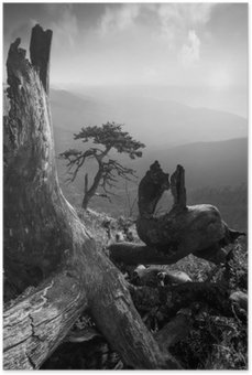 Plakát Pinetree na monuntain kopce. Černý a bílý