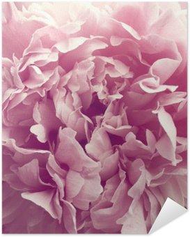 Plakát Pivoňka květ