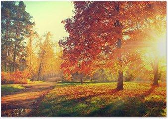 Plakát Podzimní scéna. Fall. Stromy a listí ve slunci