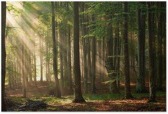 Plakát Podzimu lesních dřevin. příroda zelená dřevo slunečnímu záření pozadí.
