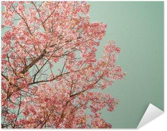 Plakát Příroda na pozadí krásné ze stromu třešňového růžový květ na jaře - vintage pastel barevný filtr