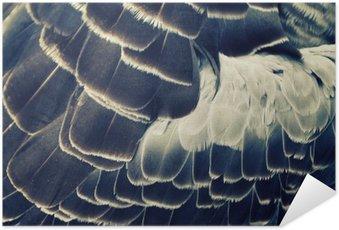 Plakát Ptačí peří pozadí