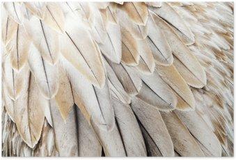 Plakát Ptačí peří