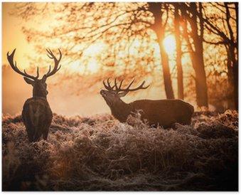 Plakát Red Deer v ranní Slunce.