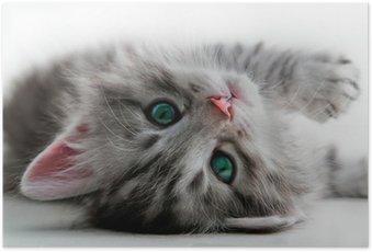 Plakat Reszta Kitten - isolated