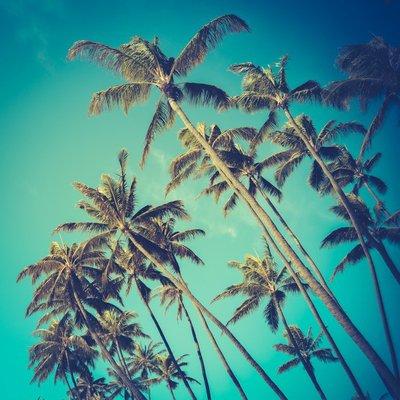 Plakát Retro Diagonal Palmy na Havaji