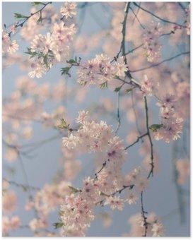 Plakát Retro Filter Cherry Blossom