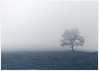 Plakat Samotne drzewo w mgle
