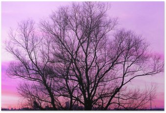 Plakát Silueta velkého starého stromu na krásný západ slunce fialové pozadí retro filtrován